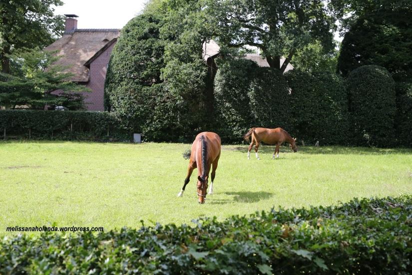 Cavalos no jardim - Blaricum